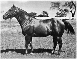Caracolito primeiro cavalo registrado na ABQM