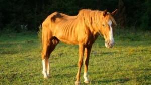 cavalo-anorexo-300x168